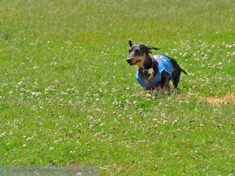 17th Annual SPCA Doggy Dash 099