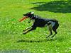 17th Annual SPCA Doggy Dash 141