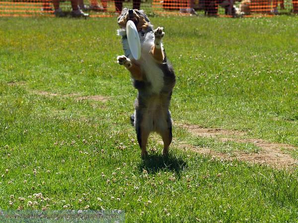 17th Annual SPCA Doggy Dash 146