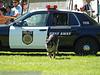 17th Annual SPCA Doggy Dash 071