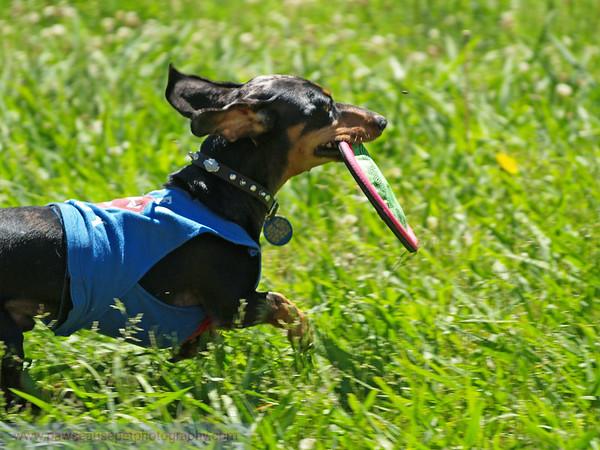 17th Annual SPCA Doggy Dash 106