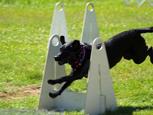 17th Annual SPCA Doggy Dash 040
