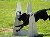 17th Annual SPCA Doggy Dash 040