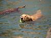 2009 Golden Swim Party 161