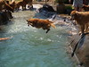 2009 Golden Swim Party 100