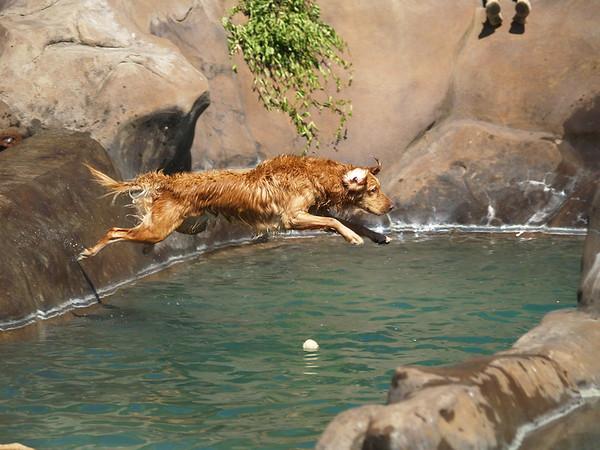 2009 Golden Swim Party 045