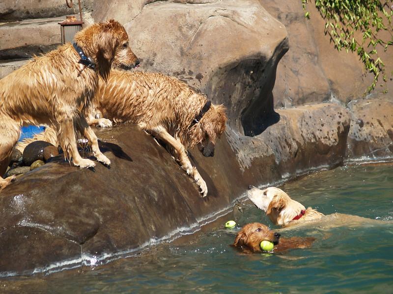 2009 Golden Swim Party 046