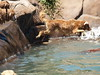 2009 Golden Swim Party 149
