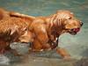 2009 Golden Swim Party 059