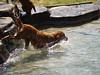 2009 Golden Swim Party 028