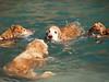 2009 Golden Swim Party 004