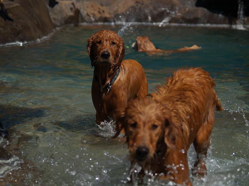 2009 Golden Swim Party 036