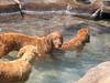 2009 Golden Swim Party 277