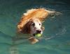 2009 Golden Swim Party 018a