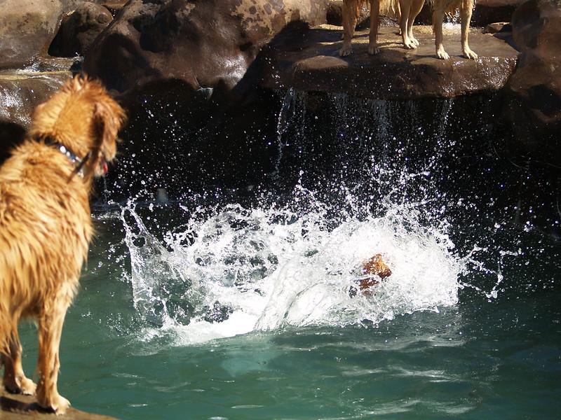 2009 Golden Swim Party 017