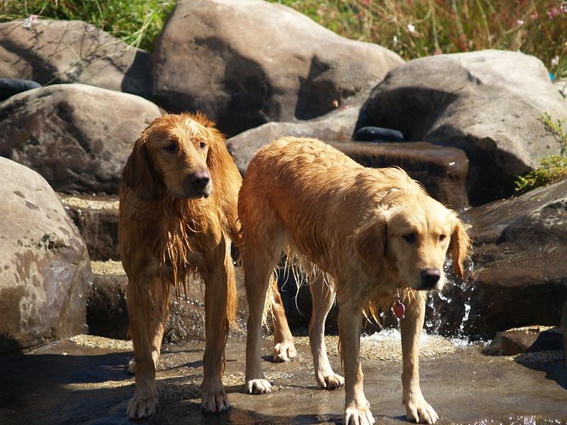 2009 Golden Swim Party 016
