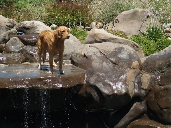 2009 Golden Swim Party 214