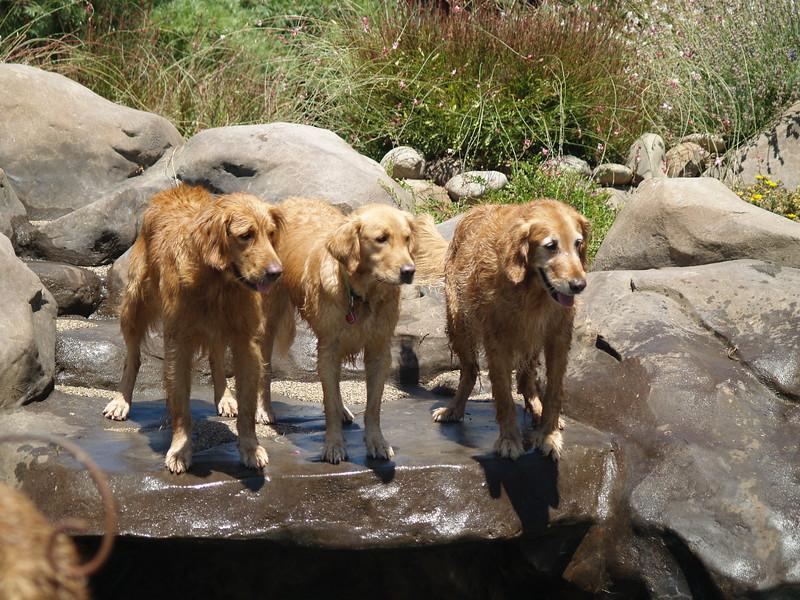 2009 Golden Swim Party 227