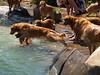 2009 Golden Swim Party 102