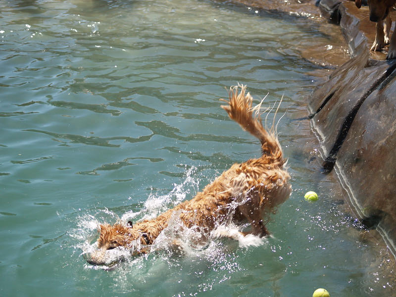 2009 Golden Swim Party 103