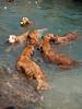 2009 Golden Swim Party 088