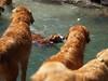 2009 Golden Swim Party 096