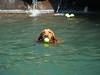 2009 Golden Swim Party 085