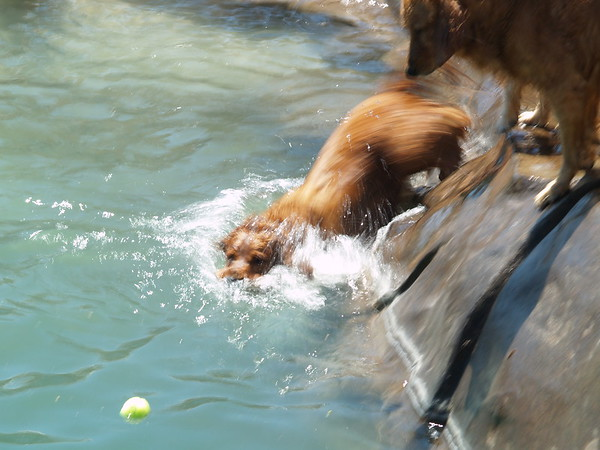 2009 Golden Swim Party 116