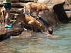 2009 Golden Swim Party 176