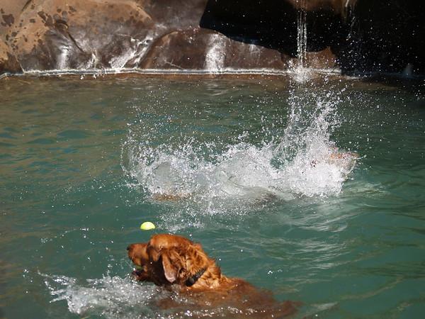 2009 Golden Swim Party 083