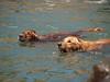 2009 Golden Swim Party 160