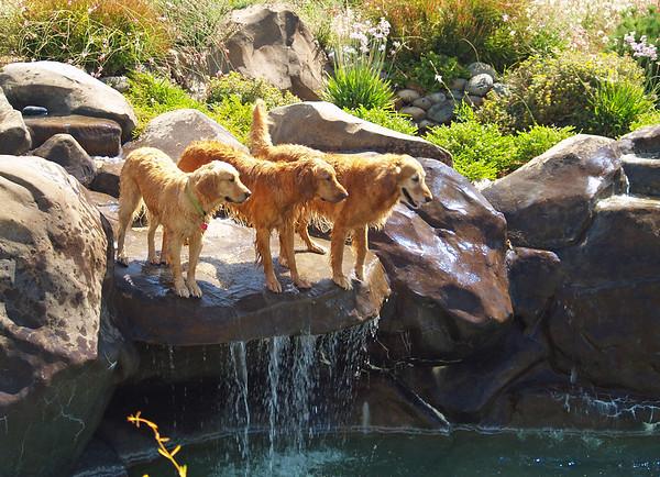 2009 Golden Swim Party 022