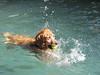 2009 Golden Swim Party 240