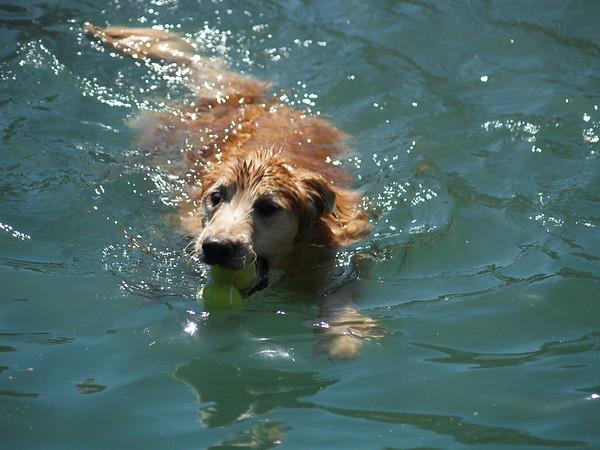 2009 Golden Swim Party 101