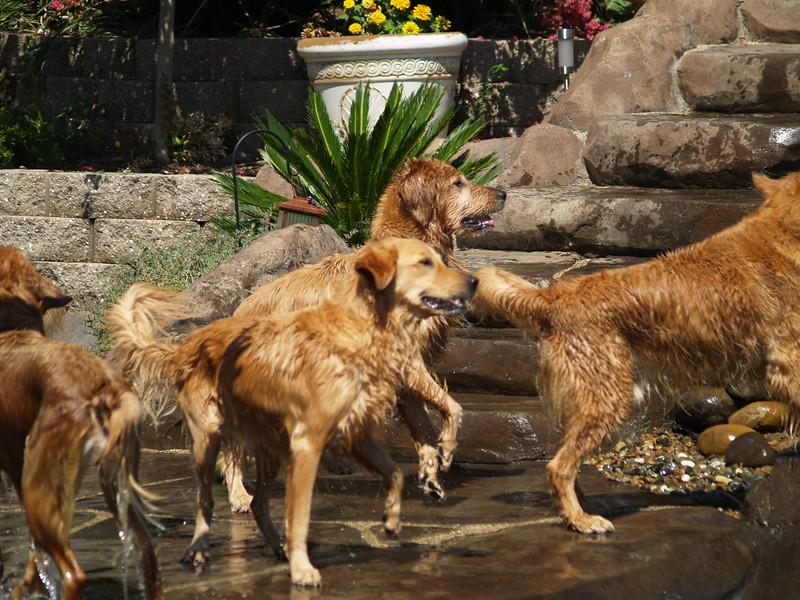 2009 Golden Swim Party 064