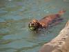 2009 Golden Swim Party 164