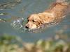 2009 Golden Swim Party 235