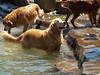 2009 Golden Swim Party 190