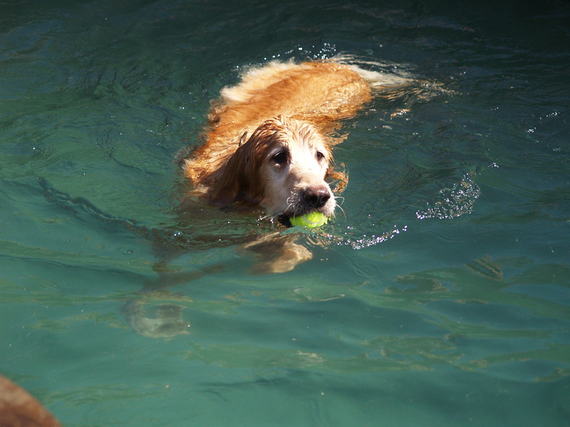 2009 Golden Swim Party 018