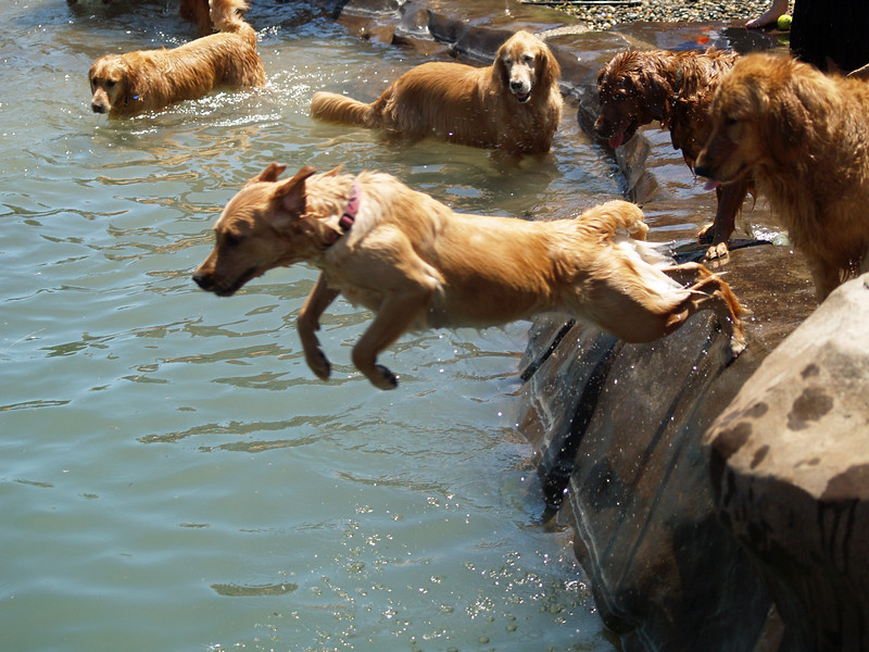2009 Golden Swim Party 193