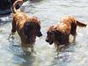 2009 Golden Swim Party 242