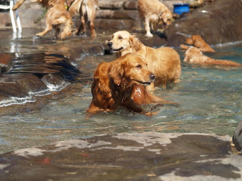 2009 Golden Swim Party 008