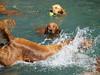 2009 Golden Swim Party 087