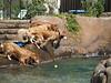 2009 Golden Swim Party 005