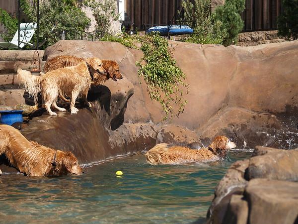 2009 Golden Swim Party 006