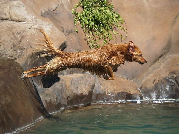 2009 Golden Swim Party 037