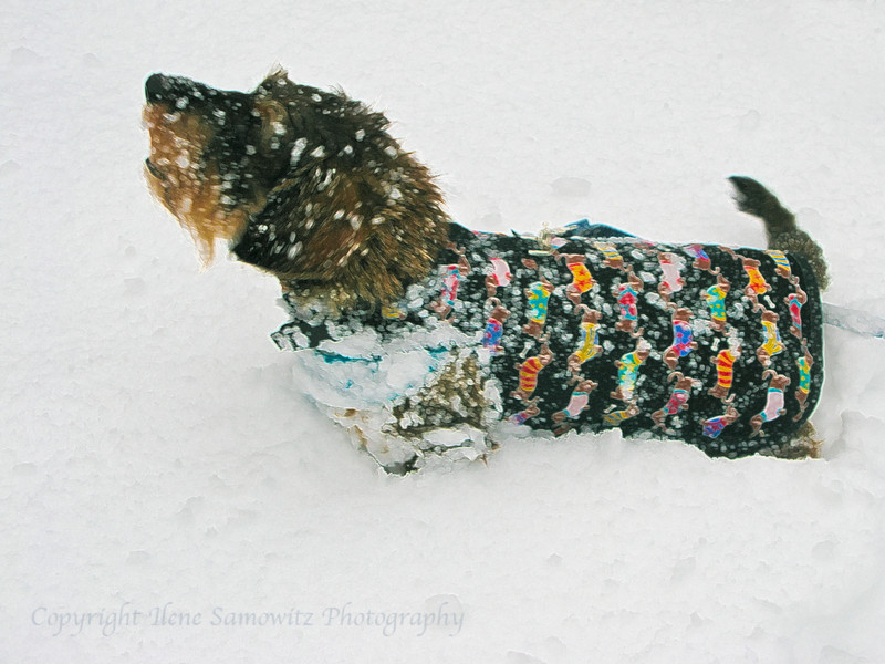 December - Help Me Build a Snow Dog<br /> Photographed by Dee Sliney