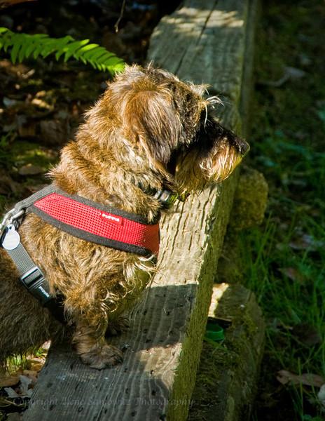 June - Sentry Dog