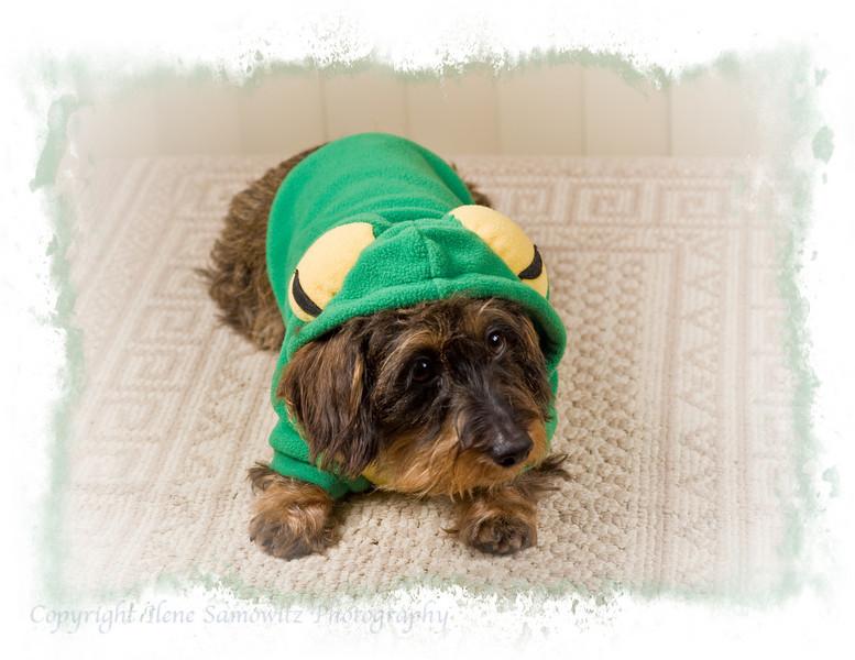 May - Springtime Frog