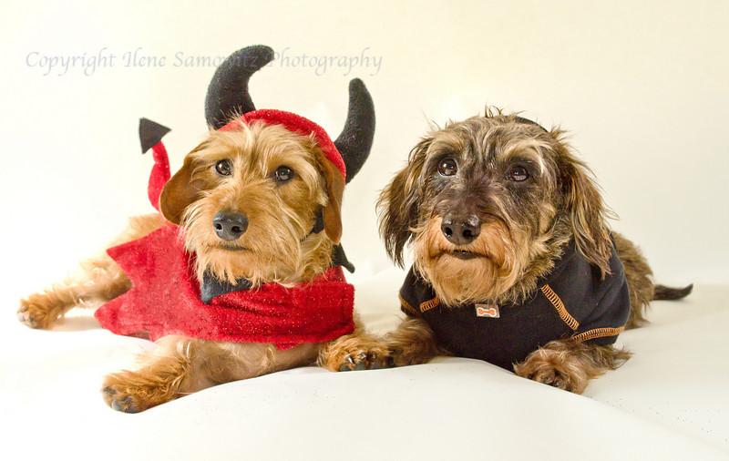 Little Devils All Year Round